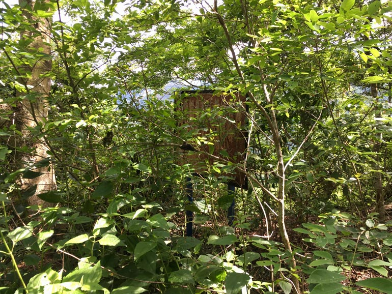 Old sign obscured by a lot of overgrowth