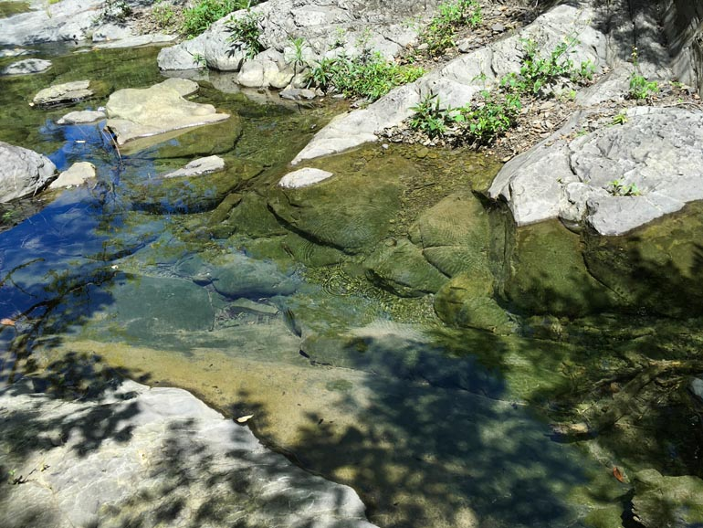 Small pool of water with fish