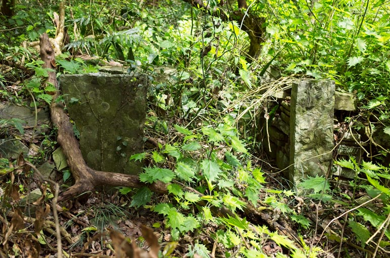 Stone foundation with vegetation overgrowth