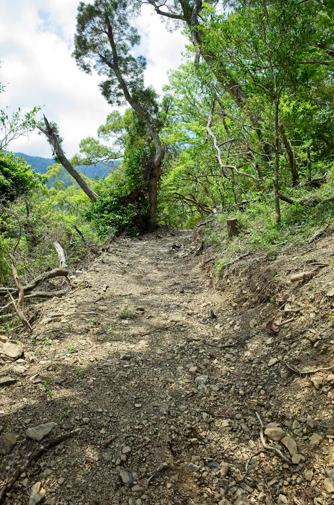 Mountain trail recently cleared