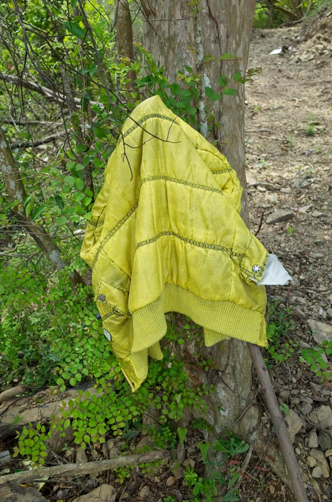 Yellow jacket hung to tree