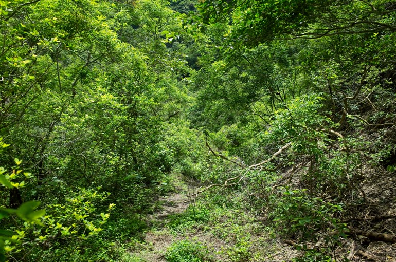 Mountain road - overgrown but walkable - downward slope