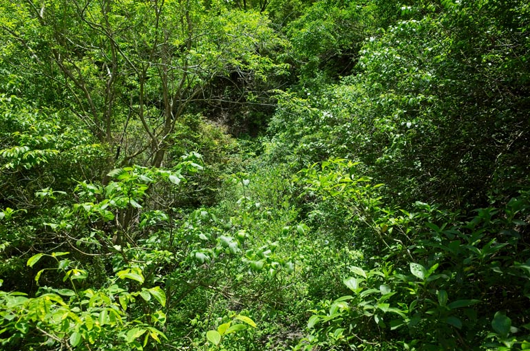 Terribly overgrown mountain dirt road - only vegetation can be seen