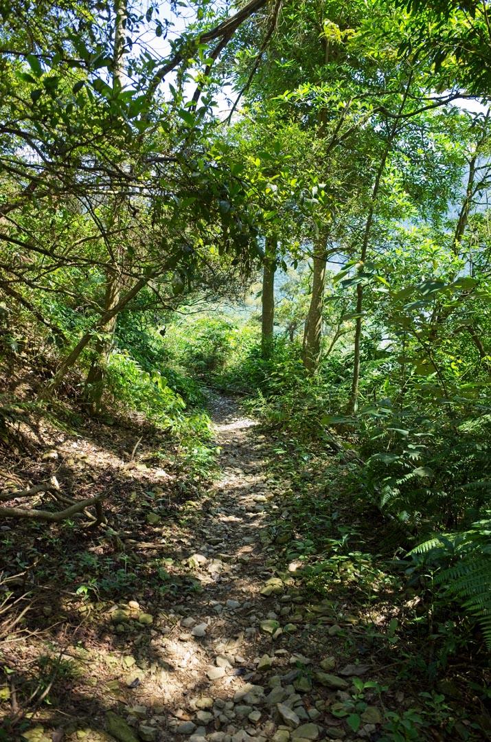 Well worn hiking trail