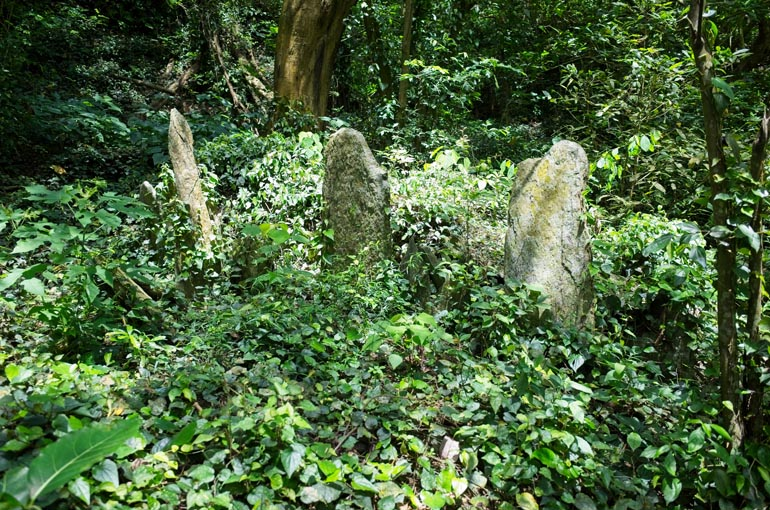 Several mid-height thin upright stones in open area