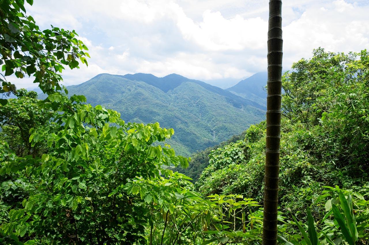 Mountain view - trees blocking the bottom third view