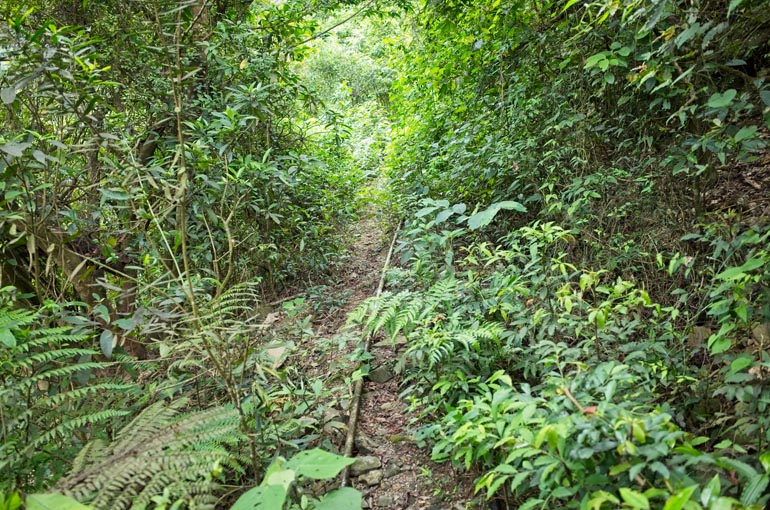 Single track trail with PVC pipe over top it