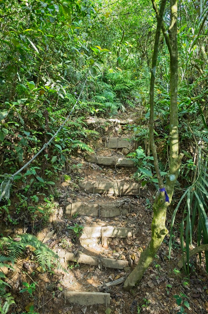 Trail going up - logs and rebar making steps