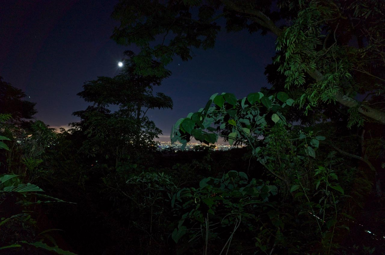 Nighttime picture with trees in front and flatland lights in the distance