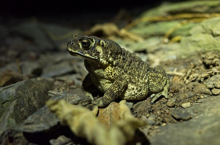 A toad sitting in a proud position